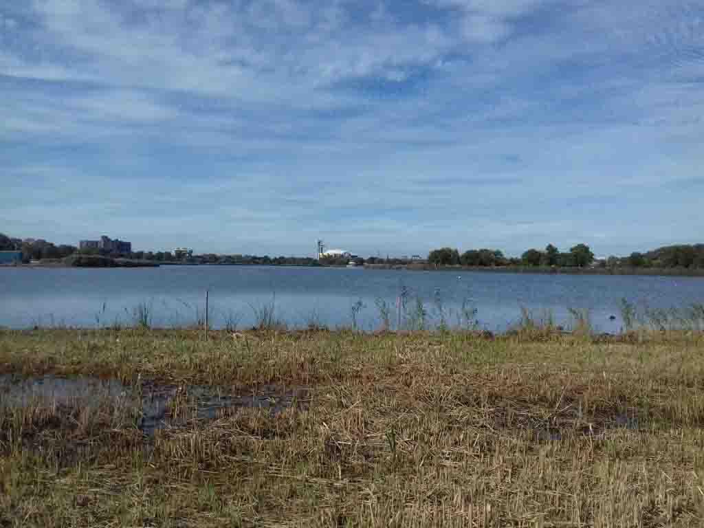 A lake in Flushing Meadows