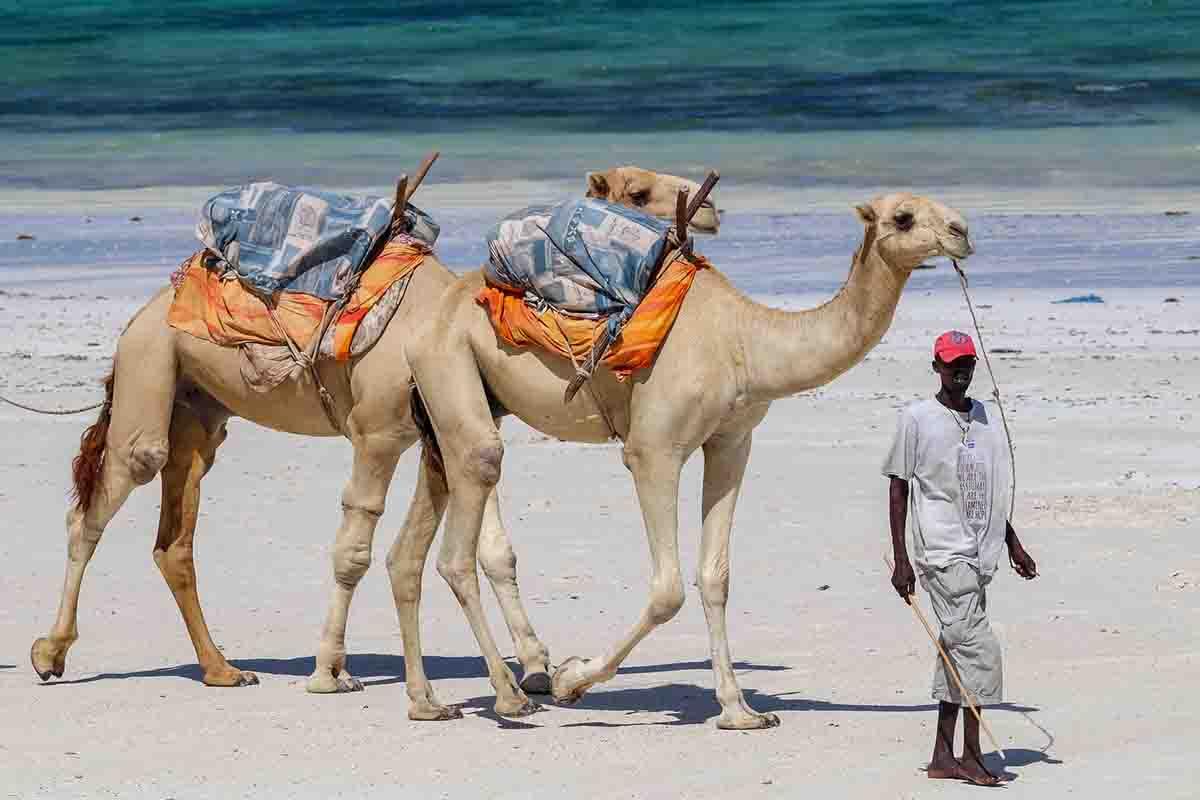 Diani Beach Picnic Sites in Kenya