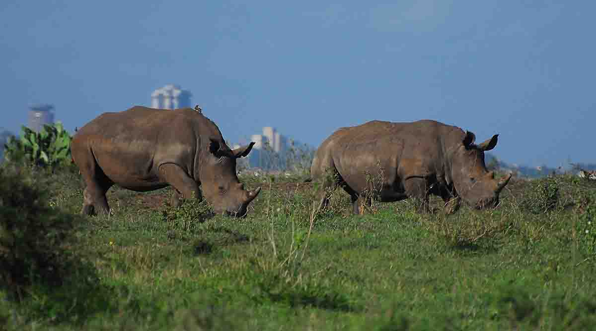Nairobi National Park Picnic site in kenya